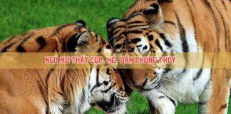 Giải mã giấc mơ thấy hổ, cọp dần, chiêm bao thấy hổ có điềm gì?