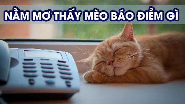 Mơ thấy mèo có điềm gì?