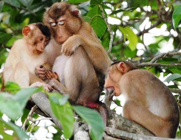 Nằm mơ thấy khỉ