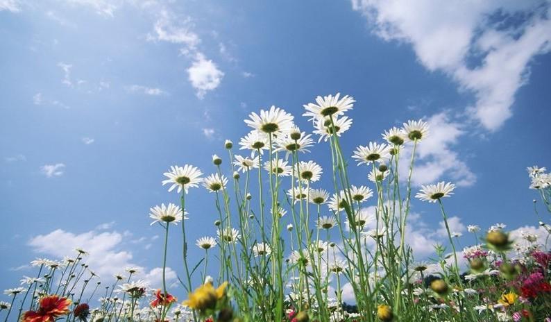 Hoa Và Bầu Trời