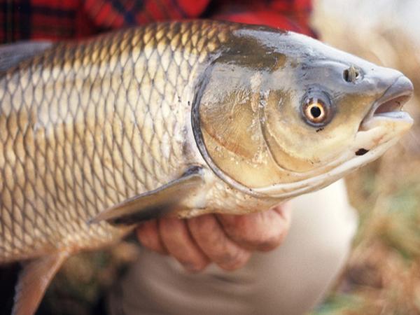 Nằm mơ thấy cá mắc lưới đánh con gì