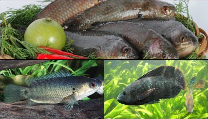 Mơ thấy cá trên cạn đánh con gì