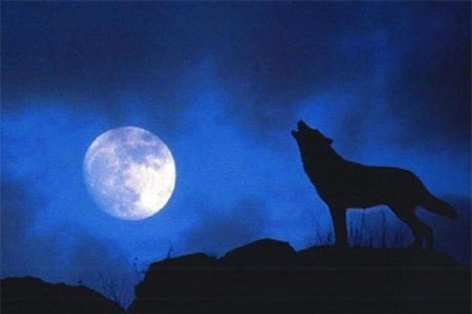 Nằm mơ thấy chó là điềm Lành hay Dữ, Đánh con gì?