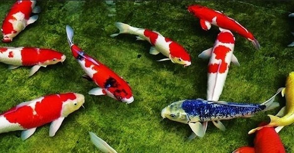 Nằm mơ thấy cá đánh số mấy, Điềm báo gì Tốt hay xấu ?