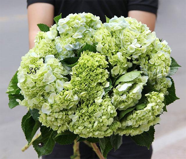 Hoa cẩm tú cầu - Ngày Lễ Vu Lan Báo Hiếu Nên Tặng Gì Cho Bố Mẹ
