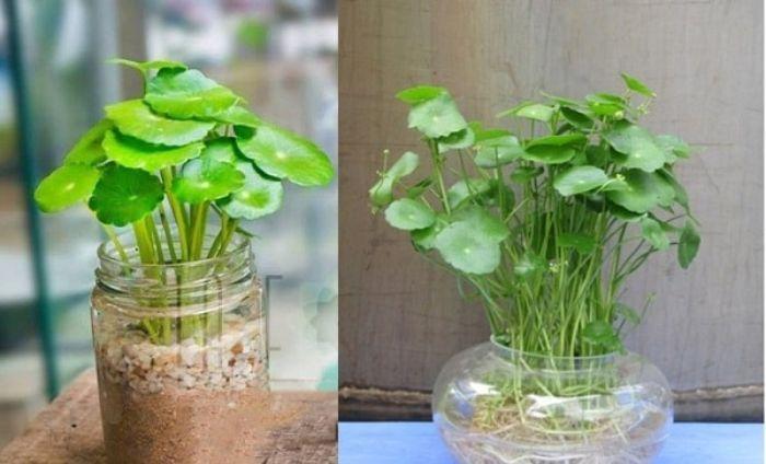 Bật mí một số cây trồng phong thủy cho mệnh Thổ